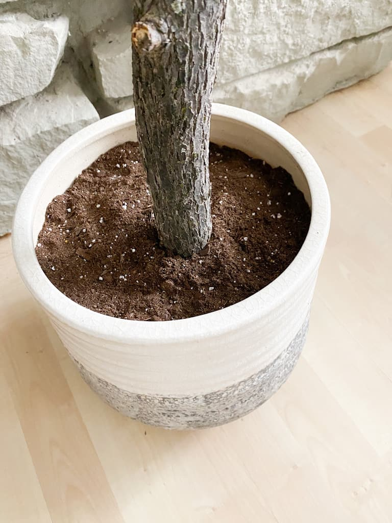 The pot of a fake tree with potting soil inside and a real tree branch sticking out.